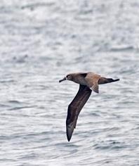 Team albatross